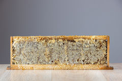 Full of fresh delicious healthy honey honeycomb in a wooden fram Stock Photo