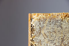 Full of fresh delicious healthy honey honeycomb in a wooden fram Royalty Free Stock Photography