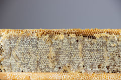Full of fresh delicious healthy honey honeycomb in a wooden fram Royalty Free Stock Images