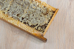 Full of fresh delicious healthy honey honeycomb in a wooden fram Royalty Free Stock Photo