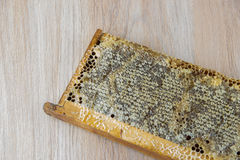 Full of fresh delicious healthy honey honeycomb in a wooden fram Royalty Free Stock Photos