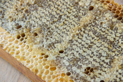 Full of fresh delicious healthy honey honeycomb in a wooden fram Stock Photos