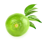 Full fresh lime and a branch Stock Photo