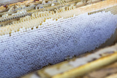 Full of fresh pure honey honeycomb Stock Image