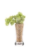 Full glass with hop and barley. Stock Photography