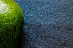 Full Green Avocado Fruit on Black Stone Background Surface royalty free stock photo