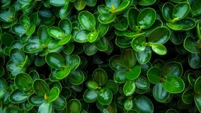 Full of green. Small ornamental plants have  beautiful designs Royalty Free Stock Images