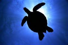 Full Green Sea Turtle Silhouette. Dive silhouette of Green Sea Turtle in clear blue sea royalty free stock photos