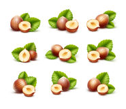 Full and Half Peeled Unpeeled Realistic Hazelnuts with Leaves Royalty Free Stock Photo