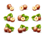 Full and Half Peeled Unpeeled Realistic Hazelnuts with Leaves Royalty Free Stock Images