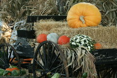 Full Halloween Stock Images