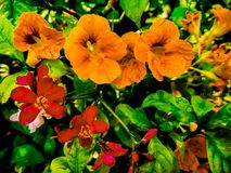 Full hd flower wallpaper. Full flower wallpaper hdflower hdwallpaper royalty free stock photography