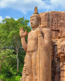 Full height Avukana statue is standing statue of Buddha. Sri Lan Royalty Free Stock Photo