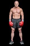 Full längdstående av den musular boxaren royaltyfria foton