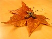 full leafmuttersikt royaltyfri foto