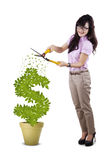 Full length businesswoman cutting plant Royalty Free Stock Photo