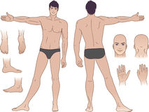 Full length (front & back) views of a standing man. Full length (front & back) views of a standing naked man stock illustration
