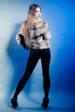 Full length of girl with long hair. Young woman in fur coat on blue. Royalty Free Stock Images