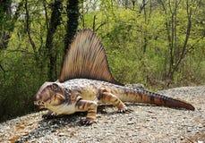 Full Length Model of Dimetrodon Dinosaur Stock Images