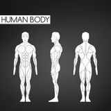 Full length muscle body, front, back view of a standing man. Illustration  on black background Royalty Free Stock Image