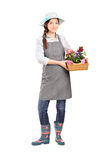 Full length portrait of a female gardener holding flower plants Stock Image