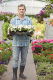Full-length portrait of gardener carrying crate with flower pots in greenhouse Royalty Free Stock Image