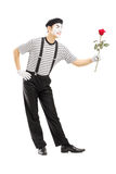Full length portrait of a male mime artist giving a rose flower Royalty Free Stock Image