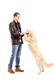 Full length portrait playing with a retriever dog Stock Images