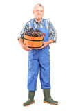 Full length portrait of a vintner holding a bucket of grapes. On white background Royalty Free Stock Photos