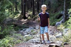 Full-length portrait of young child boy with hikers backpack and stick traveling alone through lit by bright sun mountain dense pi. Ne forest on warm summer day royalty free stock images