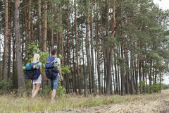 Full length rear view of young backpackers holding hands in woods stock images