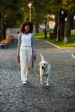 Full-length shot of pretty healthy young lady walking in the morning in park with dog. Full-length shot of pretty healthy african young lady walking in the Stock Photography