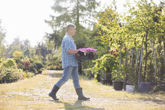 Full length side view of gardener walking while carrying crate of flower pots in garden Royalty Free Stock Photography