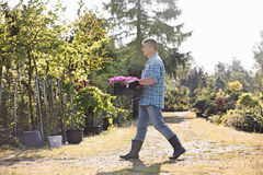Full length side view of gardener walking while carrying crate of flower pots in garden Stock Images