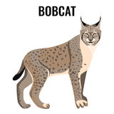 Full length spotted bobcat vector illustration isolated. Wildlife animal cat. Specie with coat in grey and white colors with sharp ears Stock Photography