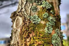 Full of lichens Stock Image