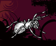 Full of life a53. Simple illustration for spider with red and black background Royalty Free Stock Images