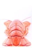 Full lobster Stock Photo