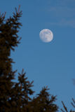 Full moon. Appearing in the early evening light Stock Photo