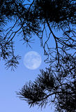 Full Moon. This image shows a full moon at day royalty free stock images