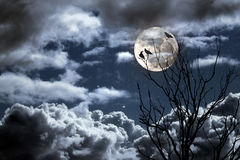 Full moon. Photo composition with full moon, part of a naked tree, clouds and crow that can be used for halloween Royalty Free Stock Images
