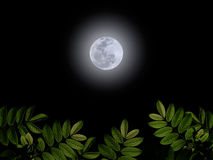 Full moon. With green leaf on darkness sky Royalty Free Stock Images