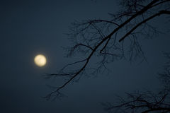 Full moon. Winter night with full moon and tree Royalty Free Stock Photos