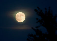 Full Moon. In The Sky Royalty Free Stock Images