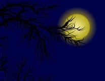 Full Moon Stock Photos