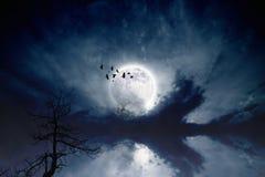 Free Full Moon Royalty Free Stock Image - 34887576