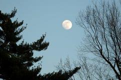 Free Full Moon Stock Image - 706901