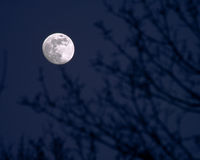 Full moon. Piercing through branches Stock Photography