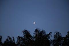 Full Moon above Coconut Tree. At dark night sky Royalty Free Stock Photo