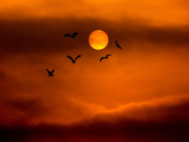 Full moon and bat. Halloween background Royalty Free Stock Images